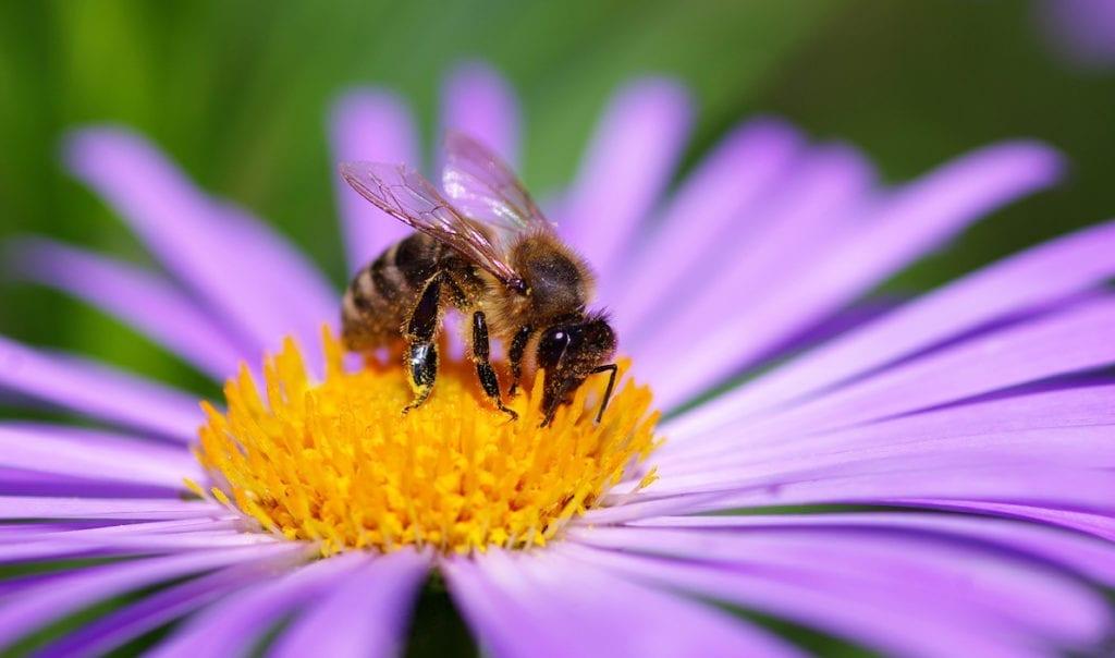 How to create a bee garden