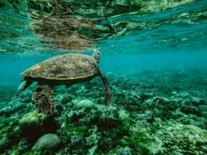 How you can help keep our oceans clean